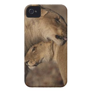Lions (Panthera leo) pair bonding, Skeleton Case-Mate iPhone 4 Case