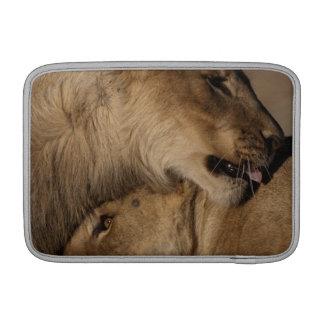 Lions (Panthera leo) pair bonding, Skeleton MacBook Sleeve