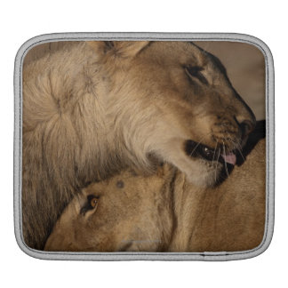 Lions (Panthera leo) pair bonding, Skeleton iPad Sleeve