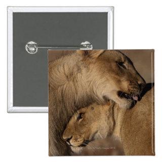 Lions (Panthera leo) pair bonding, Skeleton Pinback Button