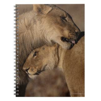 Lions (Panthera leo) pair bonding, Skeleton Spiral Notebook