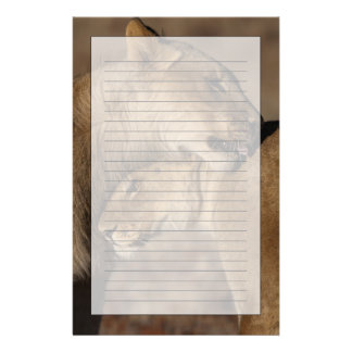 Lions (Panthera leo) pair bonding, Skeleton Stationery