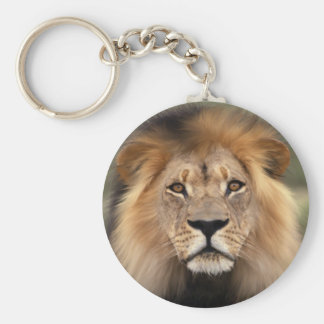 Lions Photograph Keychain