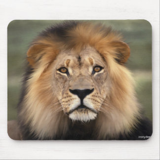 Lions Photograph Mouse Pad