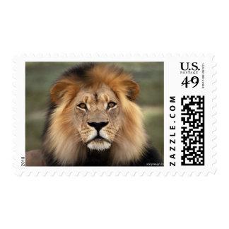 Lions Photograph Postage