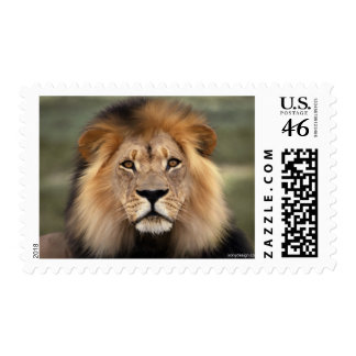 Lions Photograph Postage Stamps