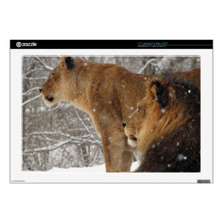 Lions Skin For Laptop