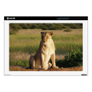 "Lions Skin For 17"" Laptop"