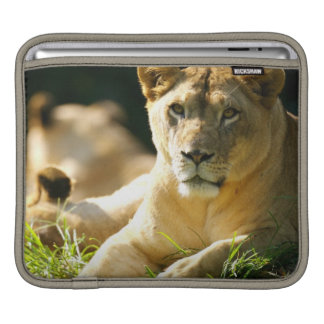 Lions Sleeves For iPads
