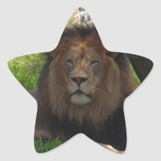 Lions Star Sticker