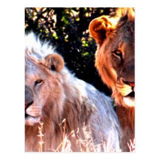 Lions Touch Postcard