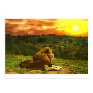 Lion's View Postcard