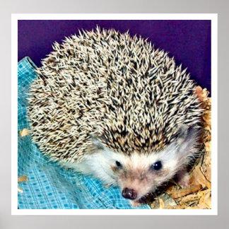 Lioti the hedgehog poster