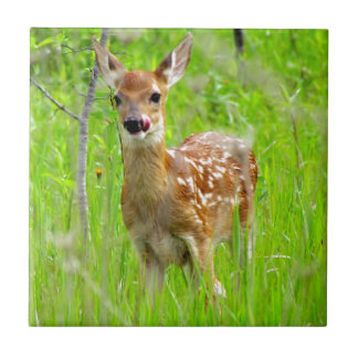 Lip Licking Fawn Tile