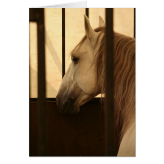 Lipizzan After the Show Greeting Card