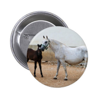 Lipizzan Mare and Foal Pinback Button