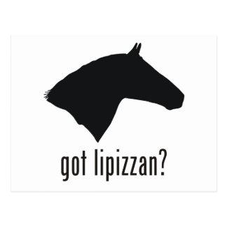 Lipizzan Postcard