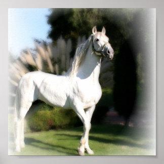 Lipizzaner White Horse Print