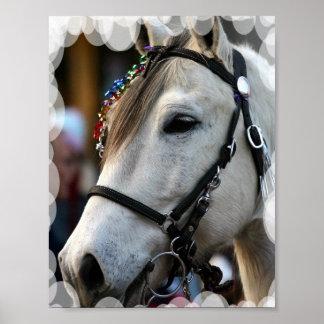 Lippizan Horse Poster