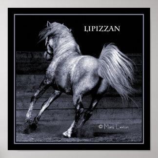 Lippizan Poster