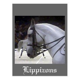 Lippizons 2009 postcard