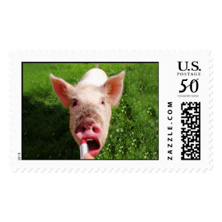 Lipstick on a Pig Wide Size Postage
