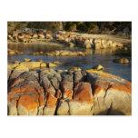 Liquen anaranjado en rocas, bahía de Binalong, bah Postales
