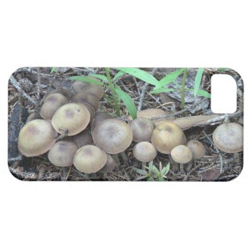 Liquen de la botánica del musgo de los hongos de l iPhone 5 coberturas