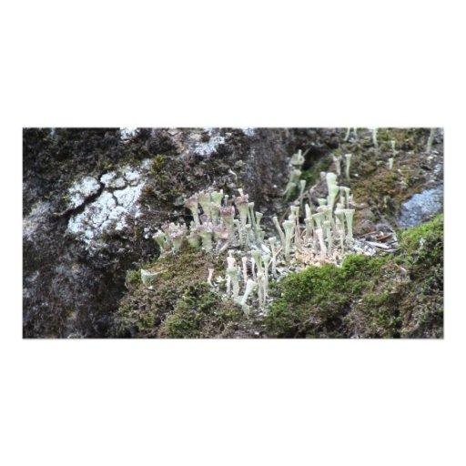 Liquen de la botánica del musgo de los hongos de l tarjetas fotograficas