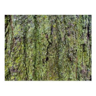 Liquen verde en corteza de árbol tarjeta postal