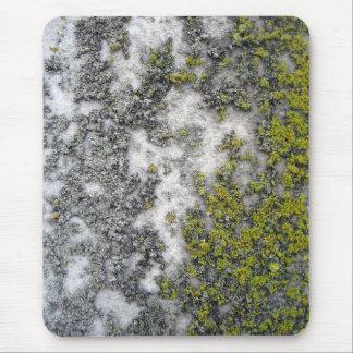 Liquen verde en el granito tapete de raton