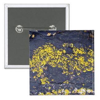 Liquenes amarillos en una roca negra pins