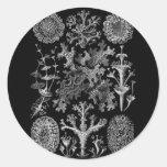Liquenes en blanco y negro (Lichenes) Pegatina Redonda