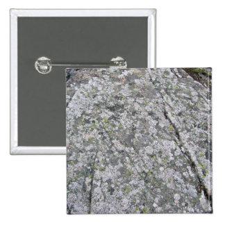 Liquenes en textura enorme de la roca pin