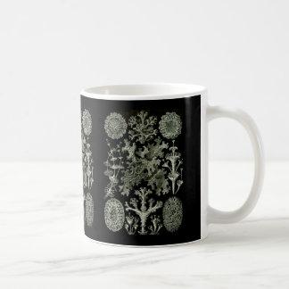 Liquenes Taza De Café