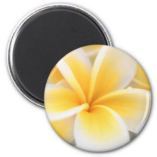 Lirio amarillo iman de frigorífico