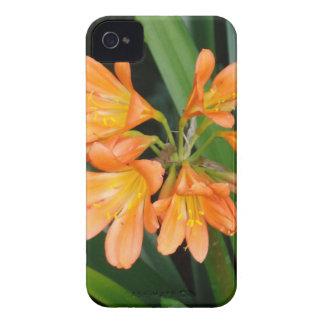 Lirio anaranjado con las floraciones múltiples iPhone 4 Case-Mate funda