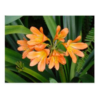Lirio anaranjado con las floraciones múltiples tarjetas postales