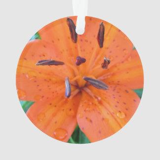Lirio anaranjado con las gotitas de agua