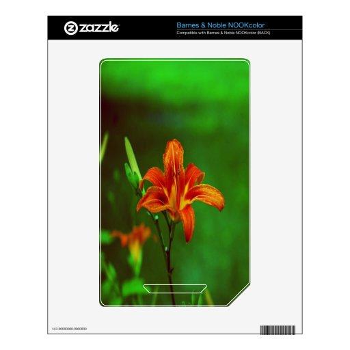 Lirio anaranjado de la flor skin para el NOOK color