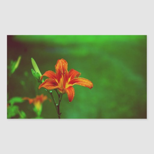 Lirio anaranjado de la flor rectangular pegatinas