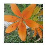 Lirio anaranjado de Starburst Teja