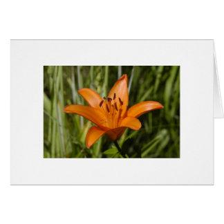 Lirio anaranjado tarjeta de felicitación