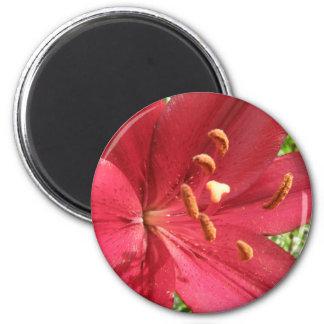 Lirio asiático rojo imán redondo 5 cm