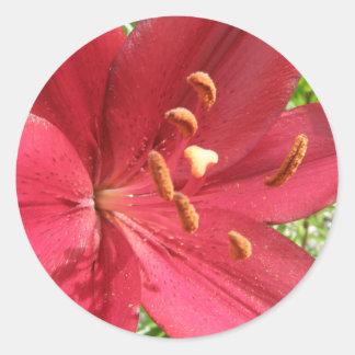 Lirio asiático rojo pegatina redonda