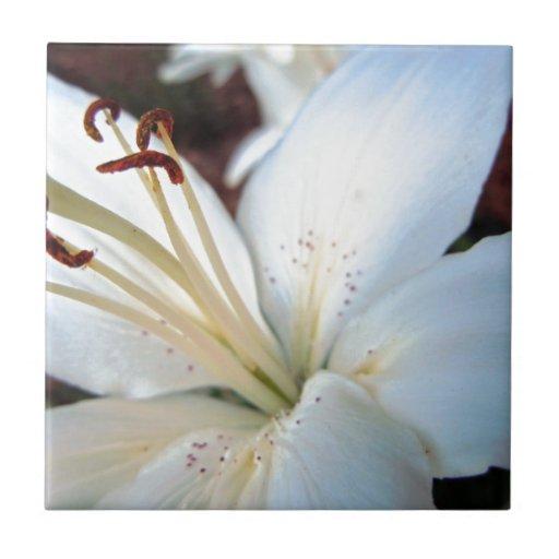 Lirio blanco bonito azulejo cuadrado pequeño