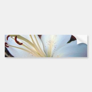 Lirio blanco bonito pegatina de parachoque