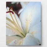 Lirio blanco bonito placas con fotos