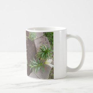 Lirio blanco taza clásica