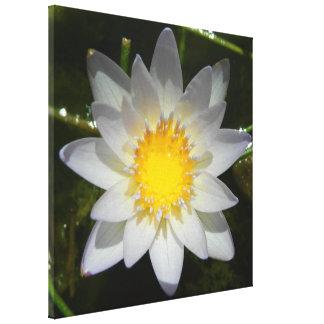 Lirio de agua blanca hermoso de la flor impresión en lienzo